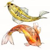 Akvarell vízi víz alatti színes trópusi halak meg. Vörös-tenger és egzotikus halak belül: aranyhal izolált.