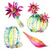 Zelené kaktusy. Květinové botanické květy. Divoké květinové listy izolované.