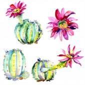 Fotografie Zelené kaktusy. Květinové botanické květy. Divoké květinové listy izolované.