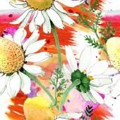 Chamomile květinové botanické květy. Divoký jarní list izolovaný. Akvarel na obrázku. Akvarel na kreslicím módu. Bezespání vzorek pozadí. Textura pro tisk tapety.