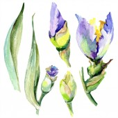 Fialová žlutá květinka. Barevné pozadí. Akvarel s vodním zbarvením. Izolovaný prvek.