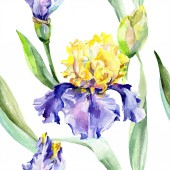Purple yellow iris. Floral botanical flower. Wild spring leaf wildflower isolated. Watercolor background illustration set. Watercolour drawing fashion aquarelle isolated.