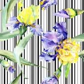 Iride gialla viola. Fiore botanico floreale. Foglia di primavera selvatica fiore selvatico isolato. Set di illustrazioni di sfondo dellacquerello. Disegno acquerello moda aquarelle isolato.