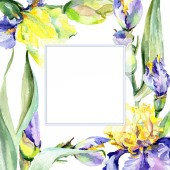 Fotografie Purple yellow iris flower. Watercolor background illustration set. Watercolour drawing aquarelle. Frame border square.