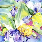 Lila sárga írisz. Virágos botanikus virág. Vad tavaszi levél vadvirág elszigetelt. Akvarell háttér illusztráció meg. Akvarell rajz divat Aquarelle elszigetelt.