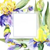 Purple yellow iris flower. Watercolor background illustration set. Watercolour drawing aquarelle. Frame border square.