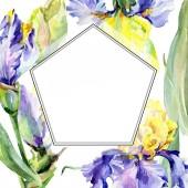 Fotografia Fiore delliride gialla viola. Set di illustrazioni di sfondo dellacquerello. Acquerello disegno aquarelle. Bordo cornice quadrato.