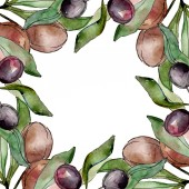 Fotografie Black olives watercolor background illustration set. Watercolour drawing aquarelle green leaf. Frame border square.