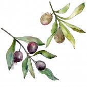 Fotografie Barevné pozadí černých oliv. Akvarel na kreslicím módu. Ojedinělý prvek ilustrace.