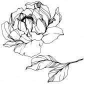 Květinové botanické květy. Černé a bílé ryté inkoustem. Izolovaný názorový prvek.