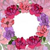 Vector Pink and purple peony. Floral botanical flower. Engraved ink art. Frame border ornament square.