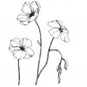 Botanická rostlinová květina Černé a bílé ryté inkoustem. Izolovaný ilustrační prvek.