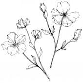 Vektor Flachs florale botanische Blume. Schwarz-weiß gestochene Tuschekunst. isoliertes Flachs-Illustrationselement.