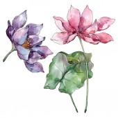 Květinové botanické květiny. Divoké květinové listí. Vodný obrázek pozadí-barevný. Akvarel na kreslicím módu Aquarelle. Izolovaný ilustrací prvku Lotus.