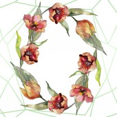 Fényképek Vörös tulipán virágos botanikus virág. Vad tavaszi levél vadvirág elszigetelt. Akvarell háttér illusztráció meg. Akvarell rajz divat Aquarelle. Keretszegély kristály Dísz tér.