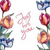 Tulipán květinové botanické květy. Divoké květinové listí. Vodný obrázek pozadí-barevný. Akvarel na kreslicím módu Aquarelle. Orámovaná hranatá hranice.