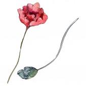 Fotografie Květinové květiny. Divoké květinové listy. Vodný obrázek pozadí-barevný. Akvarel na kreslicím módu. Izolovaný prvek pro ukázky vlčí máky.