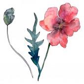 Poppy virágos botanikus virág. Vad tavaszi levél vadvirág. Akvarell háttér illusztráció meg. Akvarell rajz divat Aquarelle. Az elszigetelt Pipacsok illusztrációs elem.