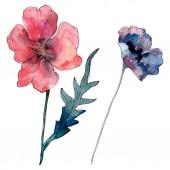 Fotografia Fiore botanico floreale di papavero. Fiore selvatico di foglia selvatica. Set di illustrazioni di sfondo dellacquerello. Disegno ad acquerello moda aquarelle. Elemento illustrazione papaveri isolati.