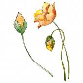 Květinové květiny. Divoké květinové listy. Vodný obrázek pozadí-barevný. Akvarel na kreslicím módu. Izolovaný prvek pro ukázky vlčí máky.