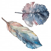 Photo Colorful bird feather from wing isolated. Watercolor background set. Isolated feathers illustration element.