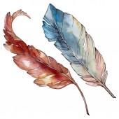 Fotografie Bunte Vogelfeder vom Flügel isoliert. Aquarell Hintergrund Set vorhanden. isolierte Federn Illustrationselement.