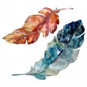 Színes madár toll a szárny elszigetelt. Akvarell háttér illusztráció meg. Különálló toll-illusztrációs elem.