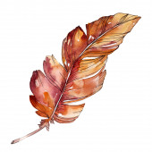 Barevné ptačí pero z odletu. Vodný obrázek pozadí-barevný. Izolovaný obrázek v izolovaném prolnutí.