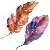 Fényképek Színes madár toll a szárny elszigetelt. Akvarell háttér illusztráció meg. Különálló toll-illusztrációs elem.
