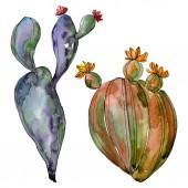 Fotografie Kaktus květinové botanické květy. Divoké květinové listí. Vodný obrázek pozadí-barevný. Akvarel na kreslicím módu. Samostatný příklad kaktusů.