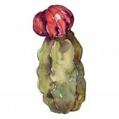 Kaktus květinové botanické květy. Divoké květinové listí. Vodný obrázek pozadí-barevný. Akvarel na kreslicím módu. Samostatný příklad kaktusů.