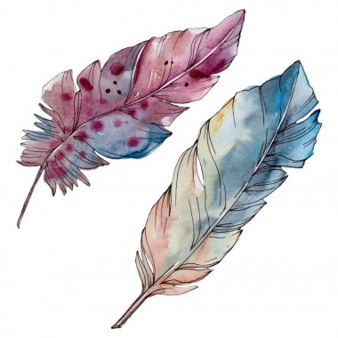 Colorful bird feather from wing isolated. Watercolor background set. Isolated feathers illustration element.