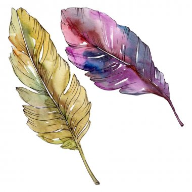 Colorful bird feather from wing isolated. Watercolor background illustration set. Watercolour drawing fashion aquarelle isolated. Isolated feather illustration element. stock vector