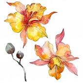 Fényképek Orchidea virág botanikai virágok. Vad tavaszi levél vadvirág elszigetelt. Akvarell háttér illusztráció meg. Akvarell rajz divat Aquarelle. Izolált orchideák illusztrációs elem.