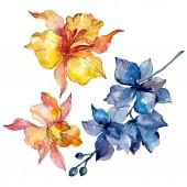 Fotografie Květinové botanické květiny. Divoké květinové listí. Vodný obrázek pozadí-barevný. Akvarel na kreslicím módu. Izolované orchideje, ilustrace.