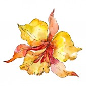 Orange orchid floral botanical flowers. Wild spring leaf wildflower isolated. Watercolor background illustration set. Watercolour drawing fashion aquarelle. Isolated orchids illustration element.