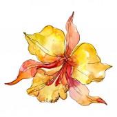 Orange orchidea virágos botanikus virágok. Vad tavaszi levél vadvirág elszigetelt. Akvarell háttér illusztráció meg. Akvarell rajz divat Aquarelle. Izolált orchideák illusztrációs elem.
