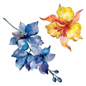 Photo Orchid floral botanical flowers. Wild spring leaf wildflower isolated. Watercolor background illustration set. Watercolour drawing fashion aquarelle. Isolated orchids illustration element.