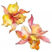 Květinové botanické květiny. Divoké květinové listí. Vodný obrázek pozadí-barevný. Akvarel na kreslicím módu. Izolované orchideje, ilustrace.