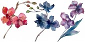 Orchid floral botanical flowers. Watercolor background illustration set. Isolated orchids illustration element.