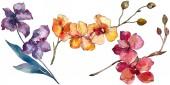 Fényképek Orchidea virág botanikai virágok. Akvarell háttér illusztráció meg. Izolált orchideák illusztrációs elem.