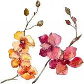Orchidee florale botanische Blumen. Aquarell Hintergrundillustration Set. isolierte Orchideen Illustrationselement.