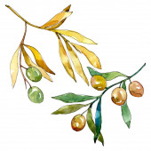 Photo Olive branch with green fruit. Watercolor background illustration set. Isolated olives illustration element.