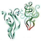 Zelené šťavnaté květinové květiny. Barevné pozadí. Izolované šťavnaté prvky ilustrace.