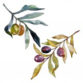 Photo Olive branch with black and green fruit. Watercolor background illustration set. Watercolour drawing fashion aquarelle isolated. Isolated olives illustration element.