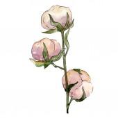 Bavlny květinové botanické květin. Divoký jarní listové wildflower izolován. Sada akvarel pozadí obrázku. Akvarel, samostatný výkresu módní aquarelle. Prvek ilustrace izolované bavlny.
