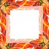 Orange tulip floral botanical flowers. Watercolor background illustration set. Frame border ornament square.