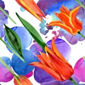 Pomerančový Tulipán květinové botanické květy. Vodný obrázek pozadí-barevný. Bezespání vzorek pozadí.