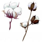 Fotografie Bílé bavlněné květinové botanické květy. Vodný obrázek pozadí-barevný. Izolovaný ilustrační prvek.