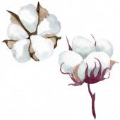 Botanische Blumen aus weißer Baumwolle. Aquarell Hintergrundillustration Set. isoliertes Baumwollillustrationselement.